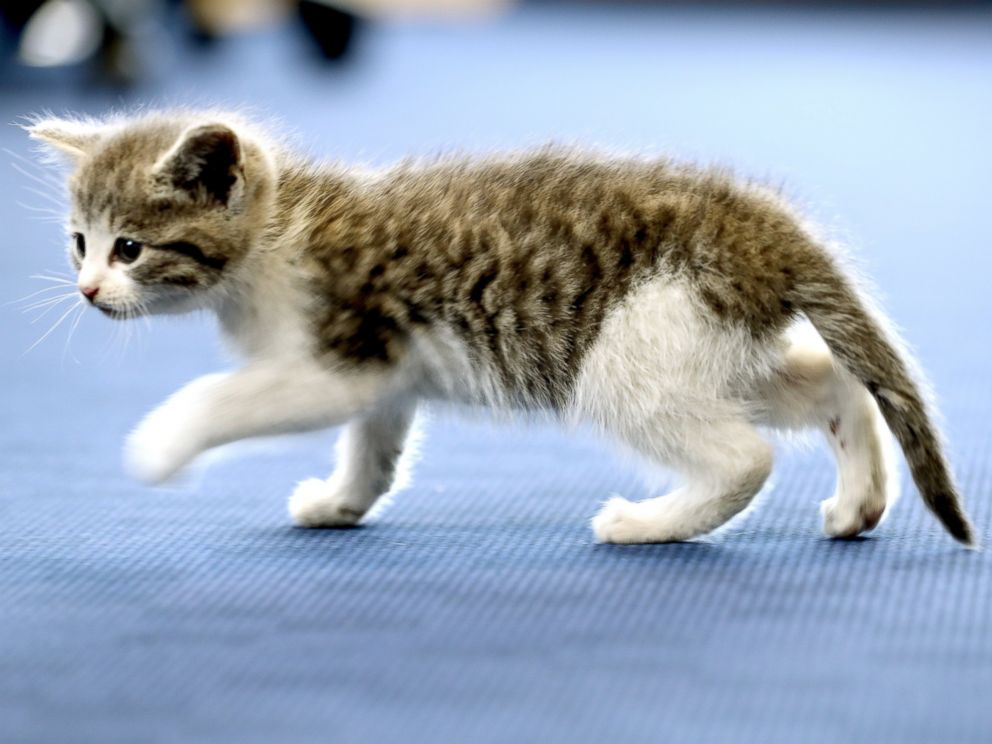 PHOTO: This kitten, nicknamed Tigger, survived a 300-mile journey hiding inside the bumper of a UK Royal Navy helicopter pilots car.