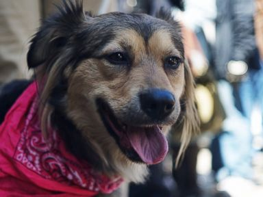 Adorable Mutt Chases Train Miles Into Manhattan