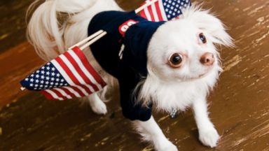 We Hold These Top 7 Pet Names to Be Self-Evident...