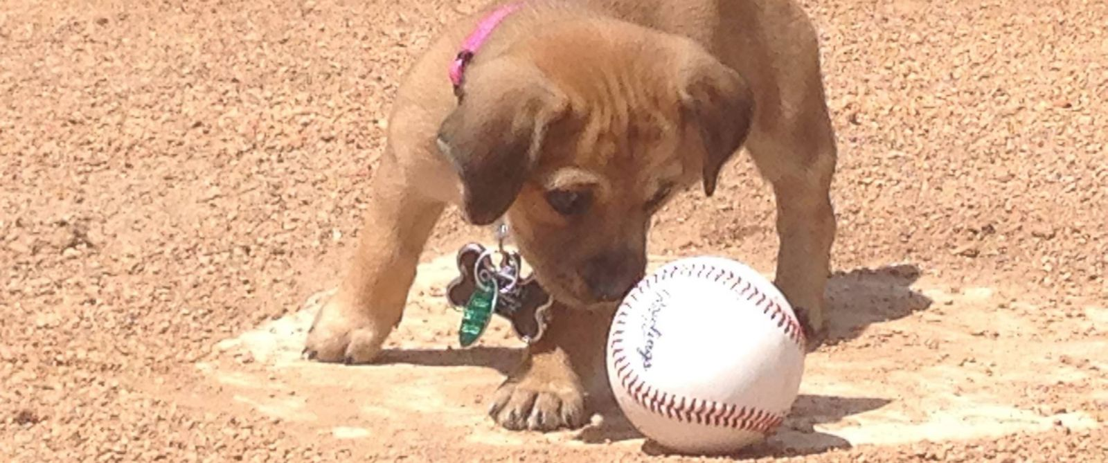 Baseball Team Adopts Dog