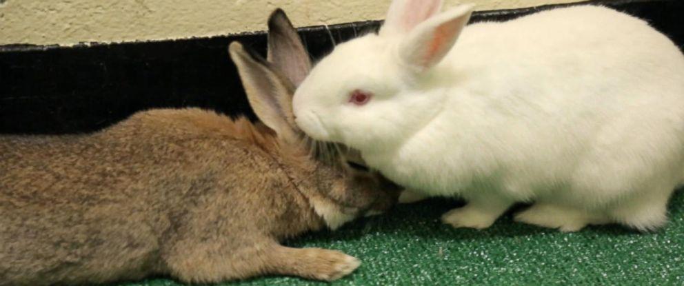 PHOTO: Tonya snuggles up to her new companion, Kenny.