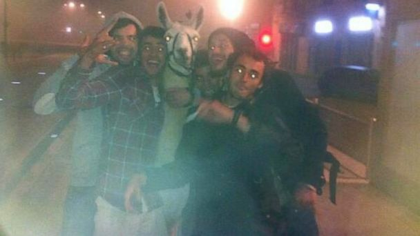 HT teens llama nt 131105 16x9 608 Five Drunk Guys Take Stolen Circus Llama for Epic Joyride