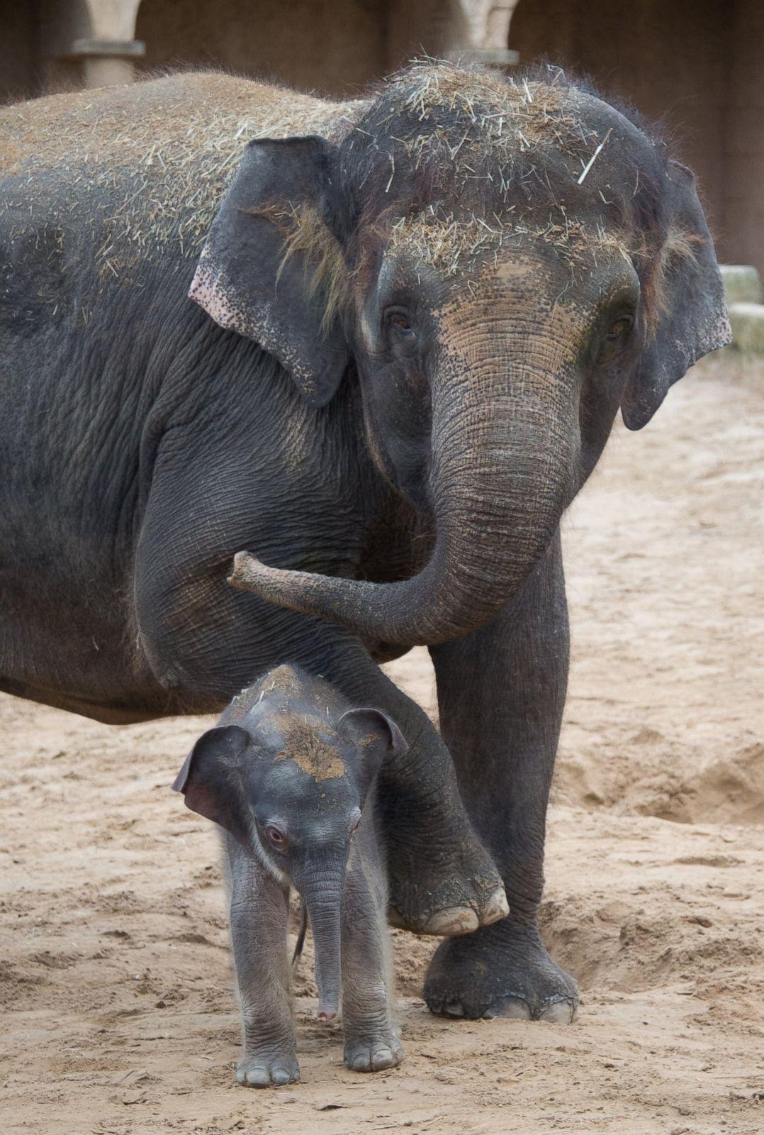 Baby animals photos baby animals ny daily news - Baby Animals Photos Baby Animals Ny Daily News 48