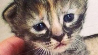 This Little Kitty is Purrmanently Sad