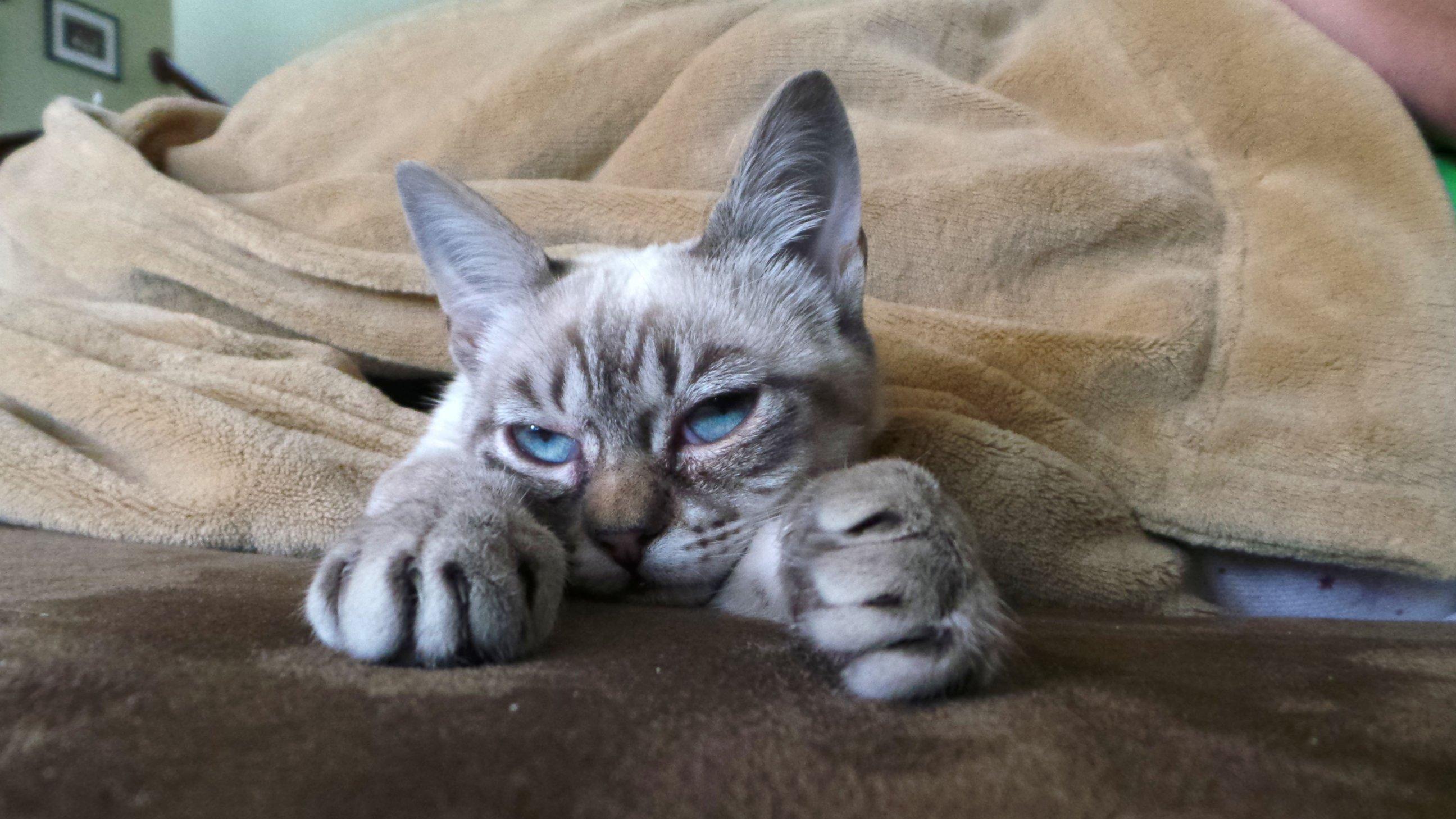 Meet Sauerkraut, the New Grumpy Cat