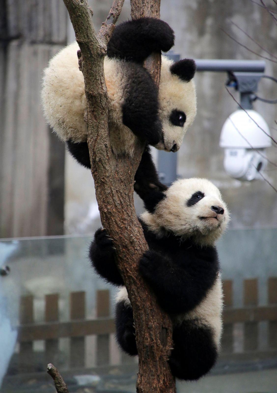 Baby animals photos baby animals ny daily news - Baby Animals Photos Baby Animals Ny Daily News 58