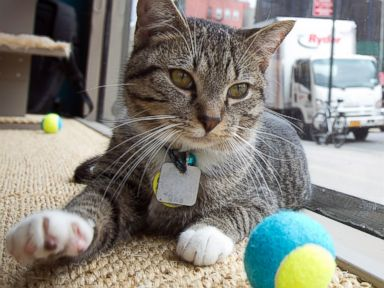 Photos: Pop-Up Cat Cafe Is Purrr-fect!