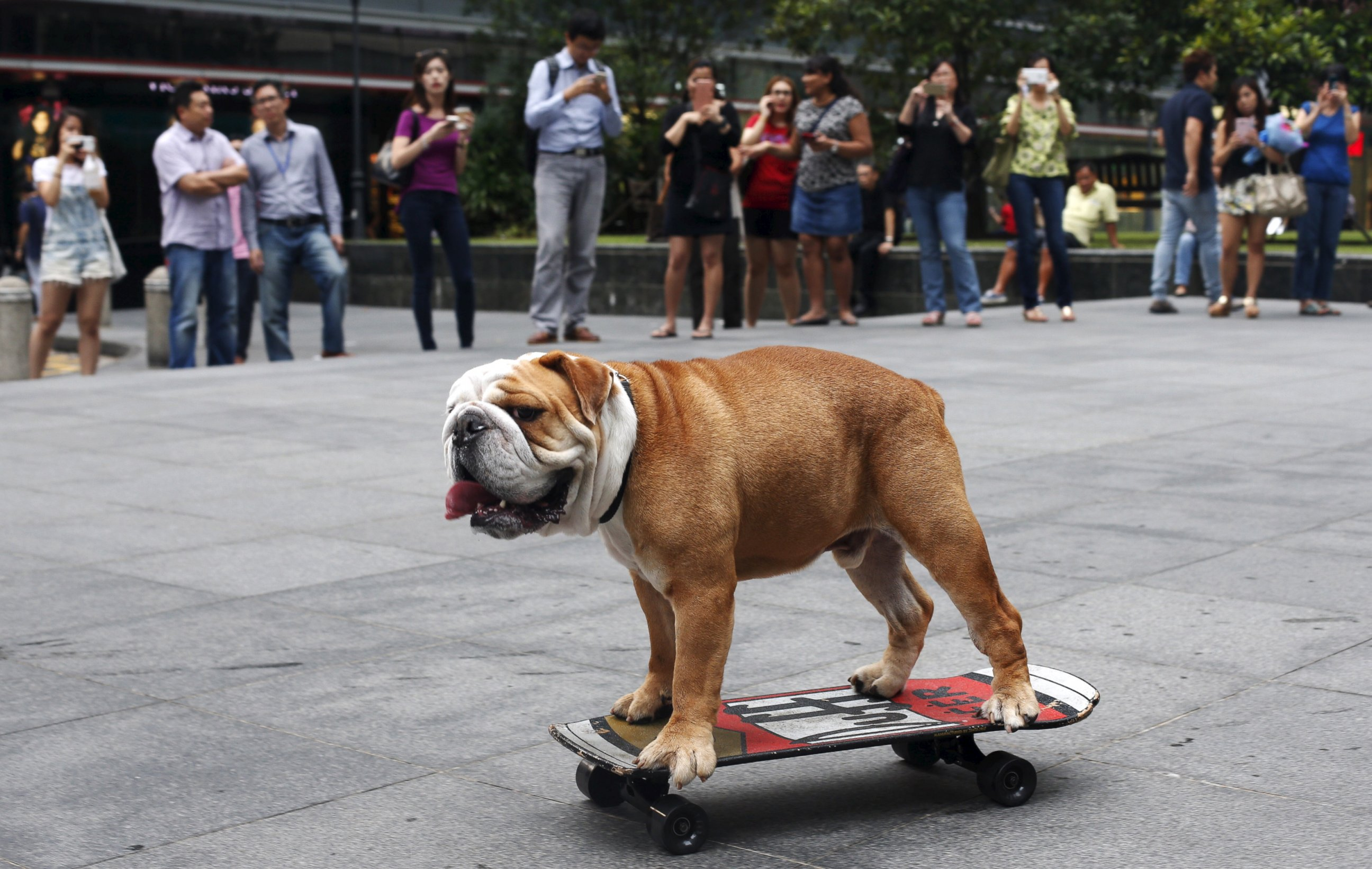 Check Out the Dog That Can Skateboard
