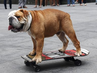 Photos:  Check Out the Dog That Can Skateboard