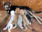 PHOTO: Animal kingdoms odd couples