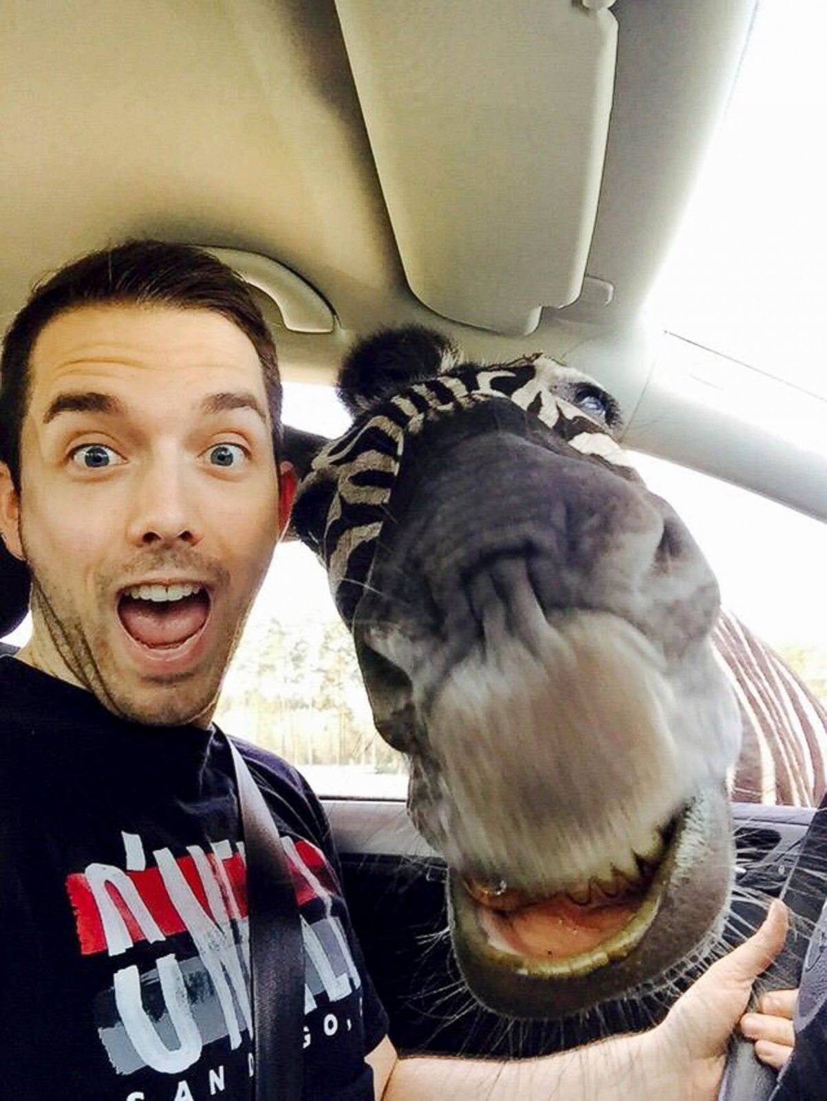 Say Cheese! Camel Smiles For Selfie Picture | Amazing Animal ...
