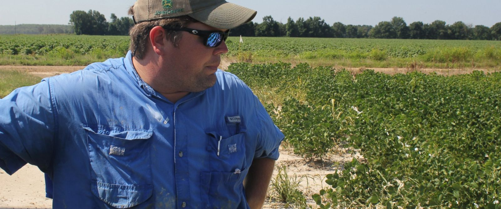In this Tuesday, July 11, 2017, photo, East Arkansas soybean farmer Reed Storey looks at his field in Marvell, Ark. Storey said half of his soybean crop has shown damage from dicamba, an herbicide that has drifted onto unprotected fields and spawned