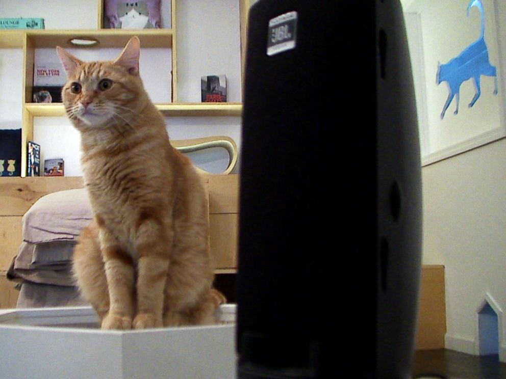 PHOTO: A cat sits next to a speaker playing music at Meow Parlour in New York on March 27, 2015.