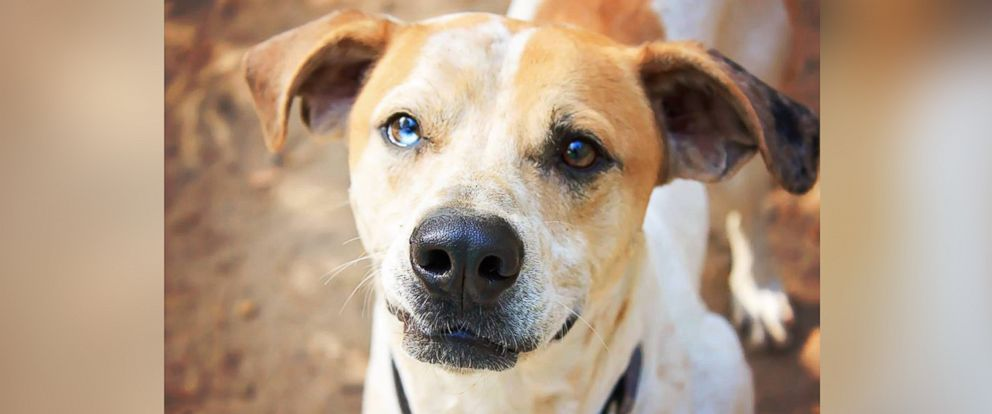 PHOTO: Meet Henry, a 3-year-old coonhound mix, living at Animal Ark Rescue in Columbus, Georgia.