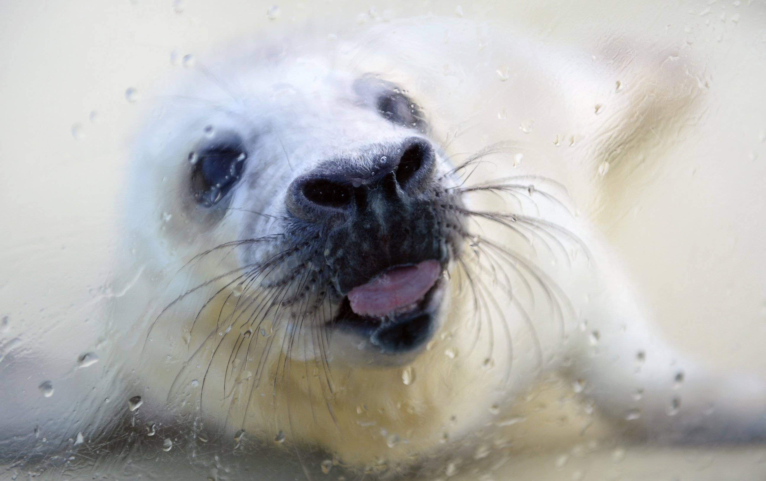 How Nikolaus the Seal Got a Second Chance at Life