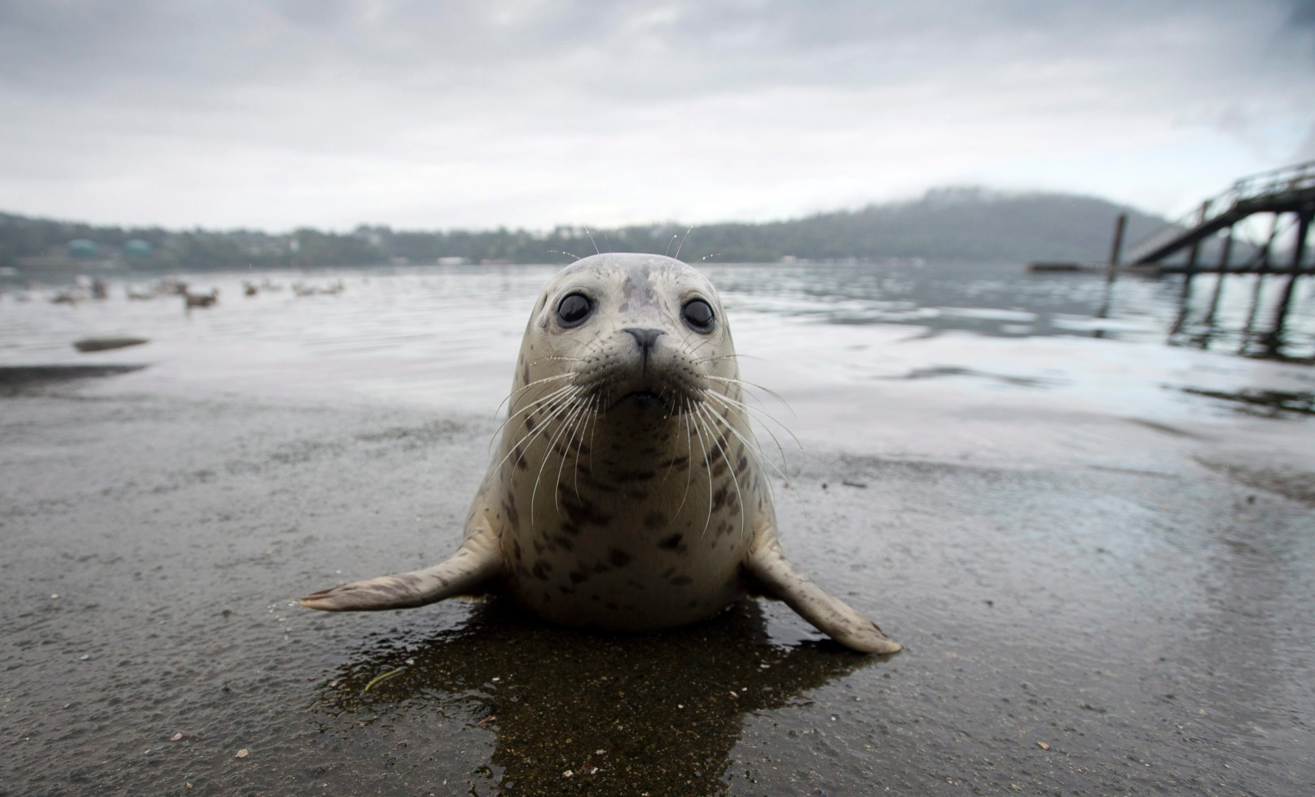 Cute Seal Pup Released Back Into the Wild