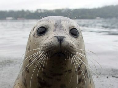 PHOTO: Cute Seal Pup Released Back Into the Wild