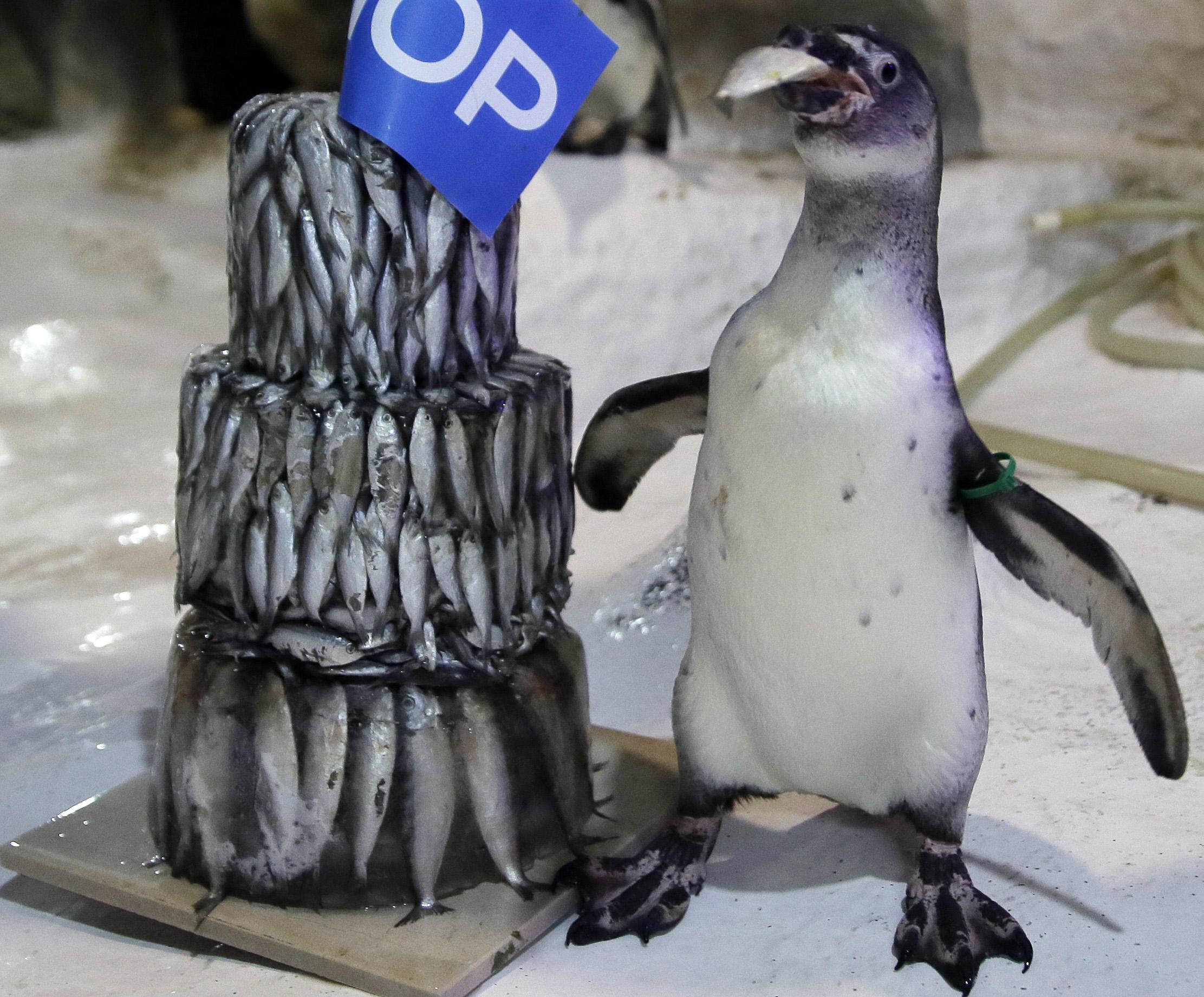 Penguin Celebrates Birthday With Unique Cake