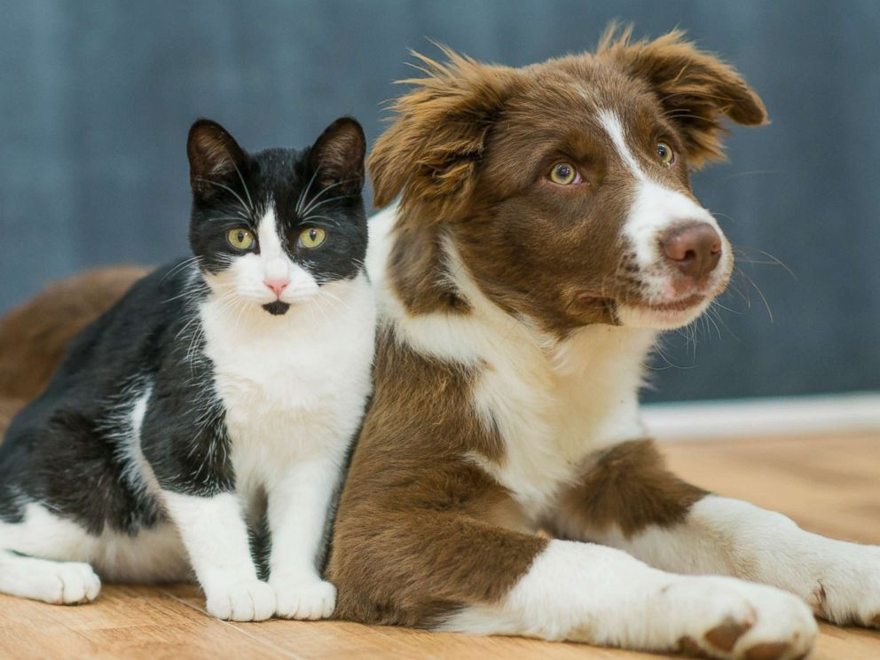 Study finds dogs have more smarts than cats