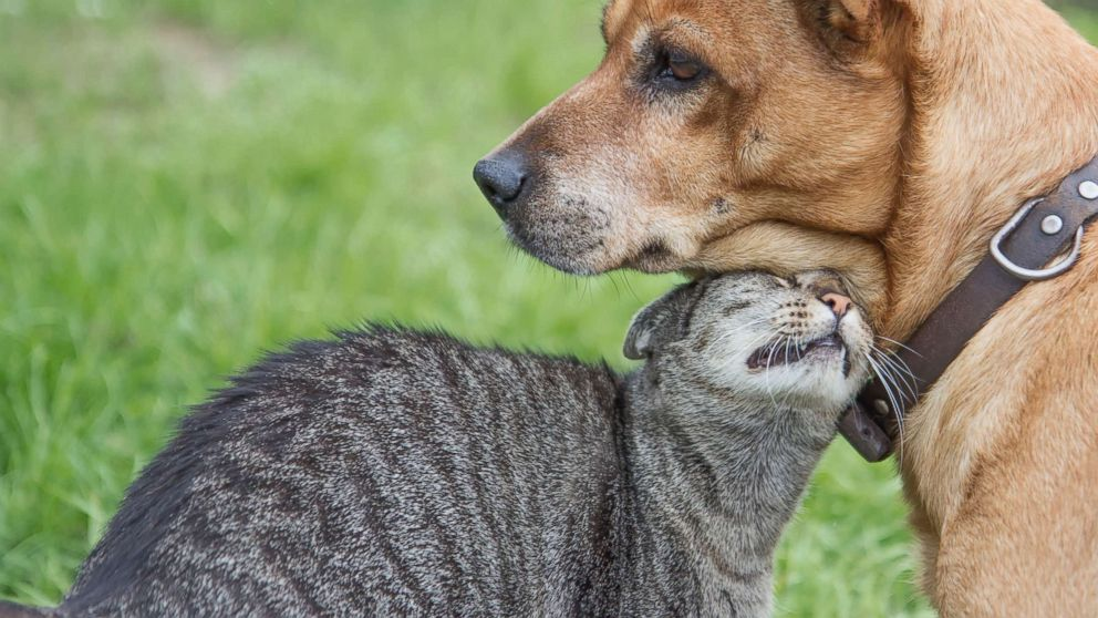 Dogs are smarter than cats, study finds
