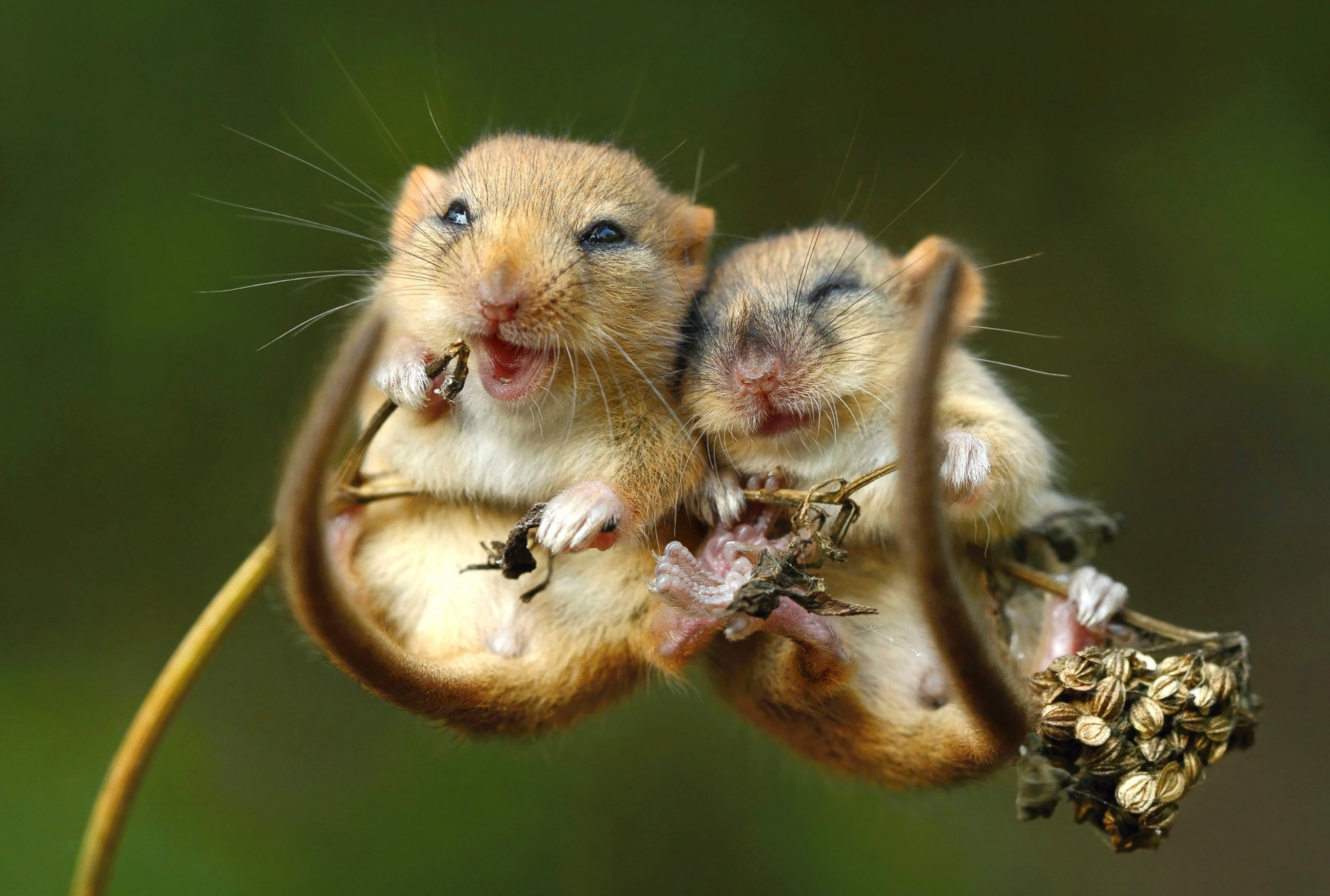 Tiny Mice Say Cheese