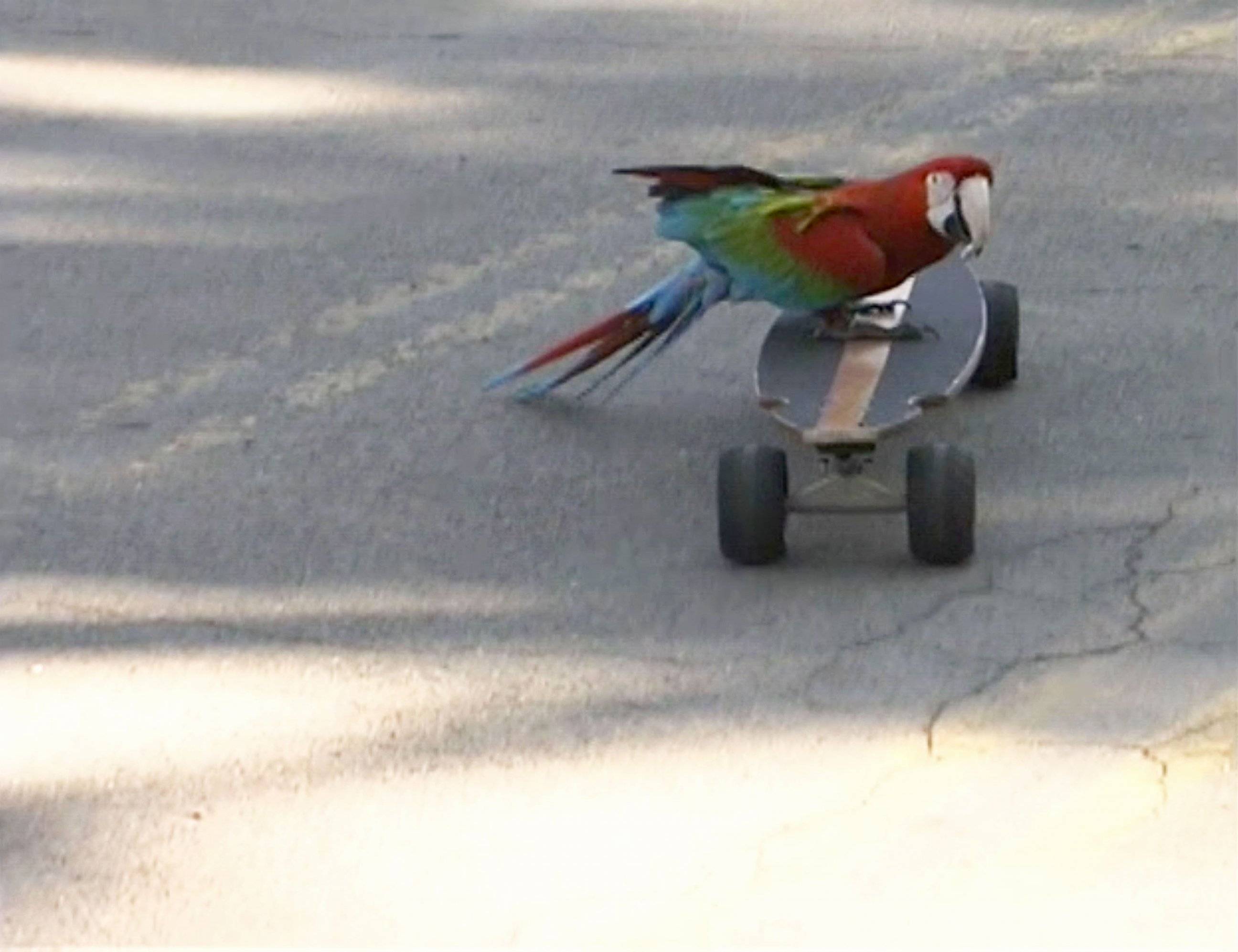 Tony Hawk Has Some Seriously Feathered Competition