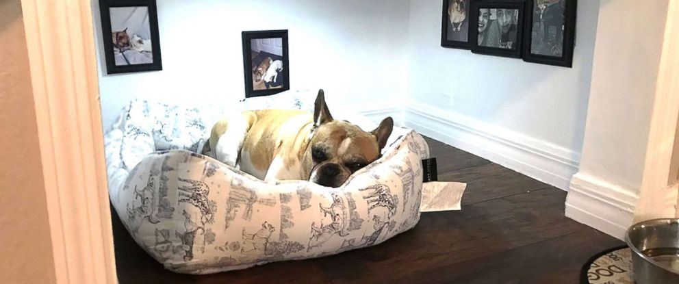dog bedroom. PHOTO  David Maceo of Tampa Fla built a tiny bedroom for his Florida man builds dog under the stairs ABC