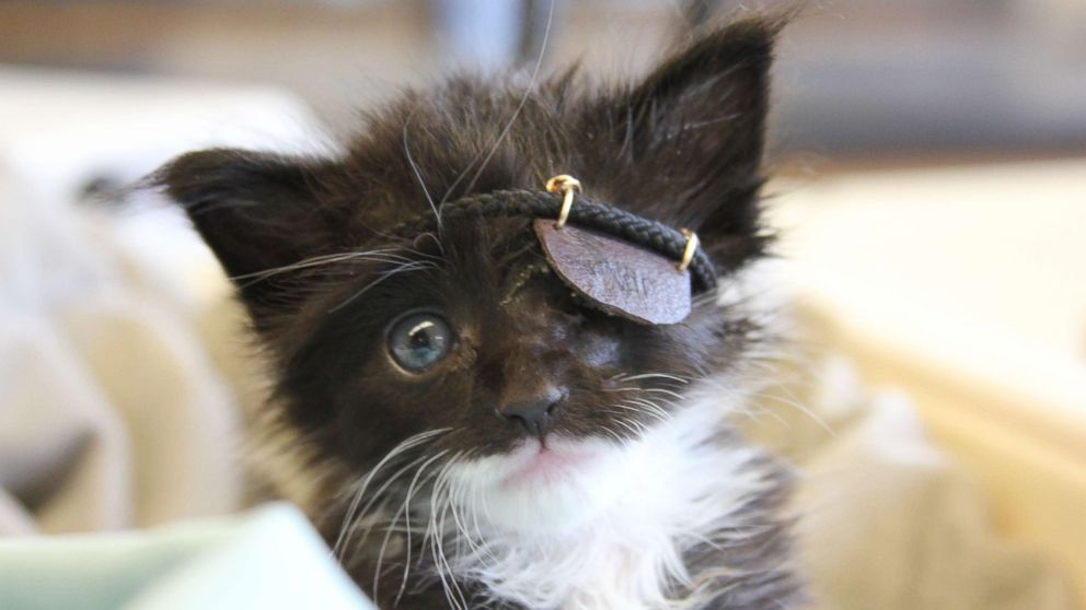 Rescue kitten gets mini eye patch after infection: 'He's a fighter'