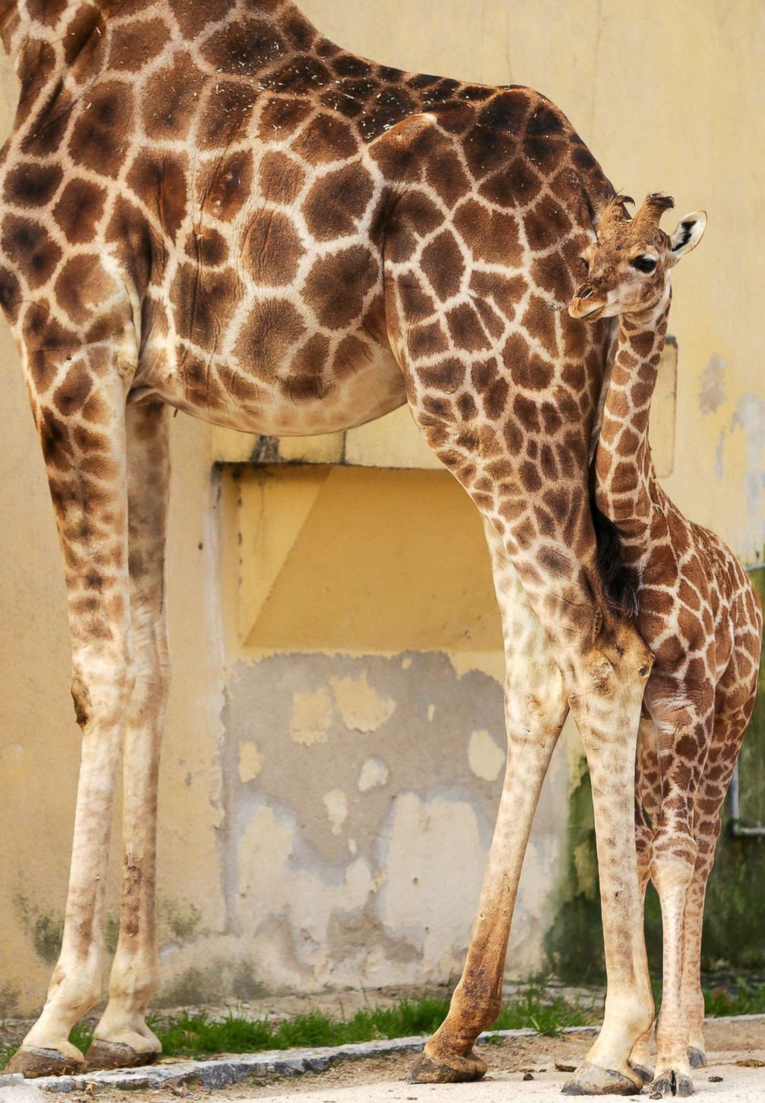 Theatrotherapy: childrens tears, sick kitten and dad-giraffe