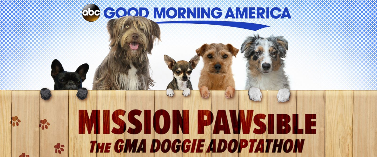 "PHOTO: ""Good Morning America"" is spotlighting dog adoption all month long to helps pups find homes."