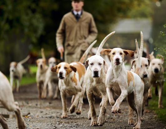 Kennels prepare for fox hunting season