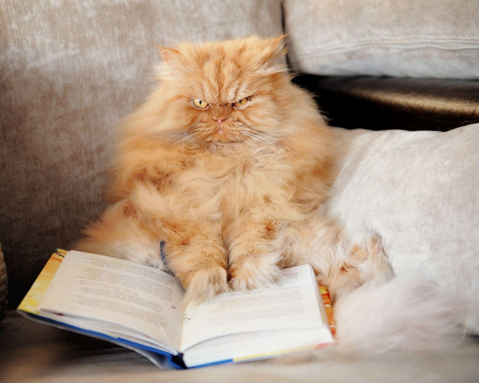 Фото сердитый кот звезда интернета 6