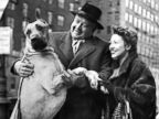 Celebrities Walk Their Dogs in 1940s New York City