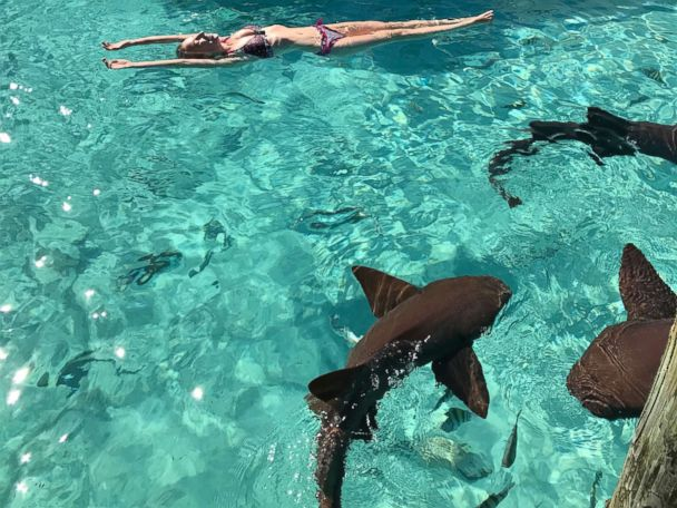 'PHOTO: Sarah Carroll floating with sharks on the final day of her honeymoon before the attack.' from the web at 'http://a.abcnews.com/images/Lifestyle/honeymoon-sharkb-ht-ml-171213_4x3_608.jpg'