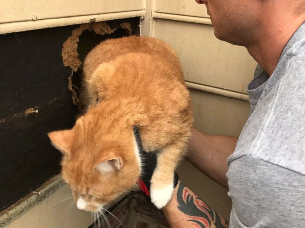 Cat Rescued From Inside a Chimney