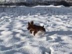 PHOTO: Twitter user @desmosDad posted a video of this dog in the snow with the caption, Just a pup, in the snow, for the 1st time, in slow-mo, on Nov. 20, 2016.