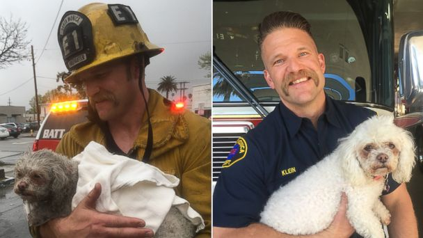 PHOTO: Santa Monica Firefighter Andrew Klein revived the pet dog of Crystal Lamirande after a fire broke out at her home in Santa Monica, Calif., March 21, 2017.