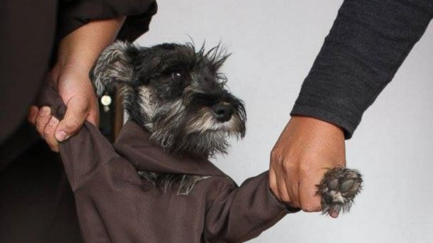 PHOTO: Friar Bigotón (Friar Moustache), a stray dog adopted by the St. Francis Monastery in Cochabamba, Bolivia, wears a habit just like his brothers.