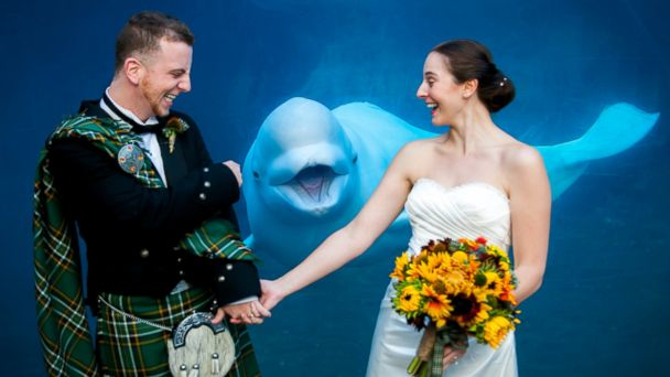 ht Beluga Photobomb Leigh Wedding ll 131212 16x9 608 Beluga Whale Smiles for the Camera in Perfectly Timed Wedding Day Photobomb