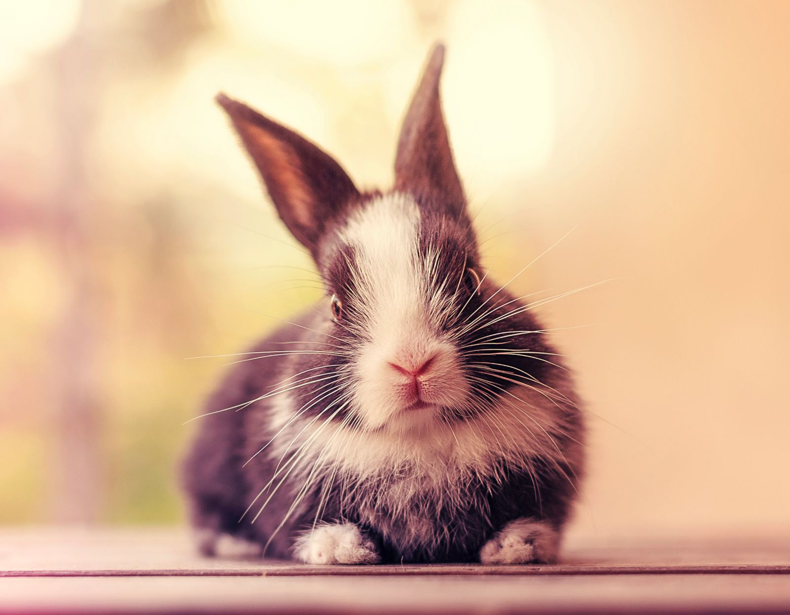 photographer documents growth of pet bunnies in adorable
