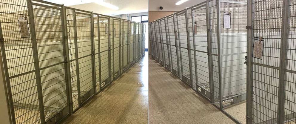 PHOTO: A adoption event at an animal shelter in Akron, Ohio led to every dog and cat being adopted.