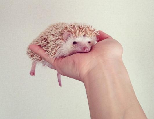 Darcy the Flying Hedgehog Picture | Meet Darcy, the World ...