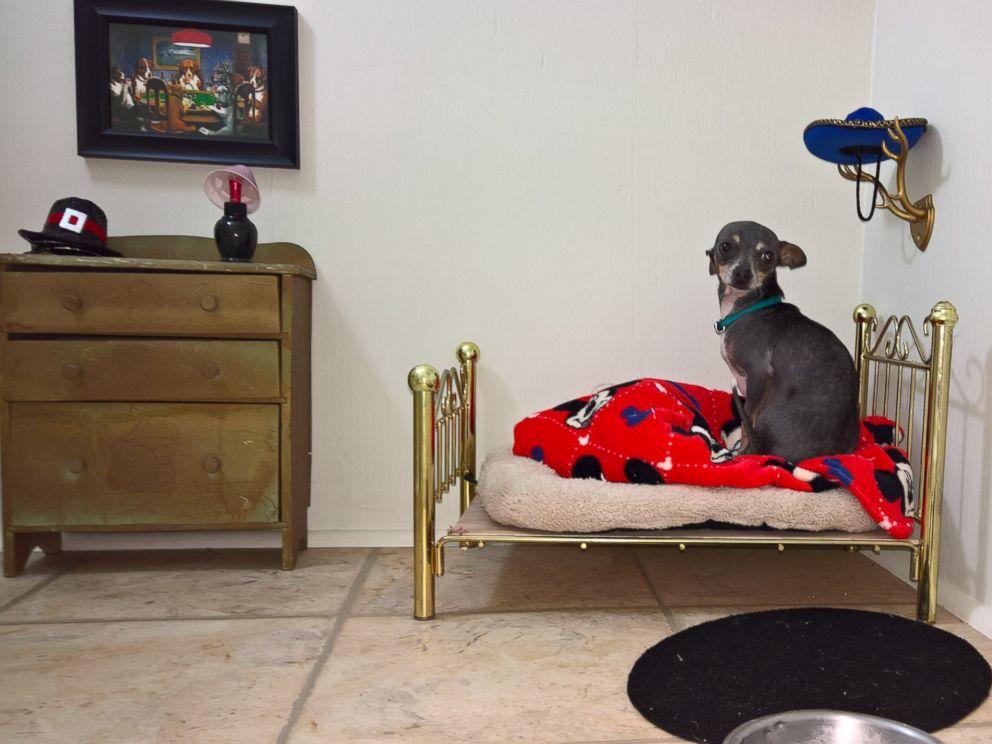 ht dog bedroom bed em 160907 4x3