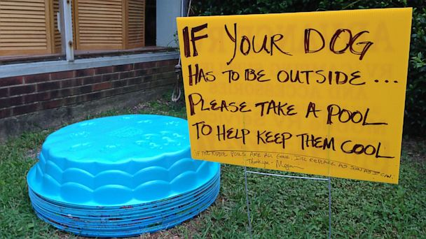 ht doggie pool kb 130806 16x9 608 Va. Cafe Owner Finds Cool Way to Keep Dogs Cool