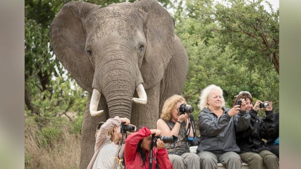 ht elephant kab 140127 16x9 608 Is This the Best Animal Photobomb Ever?