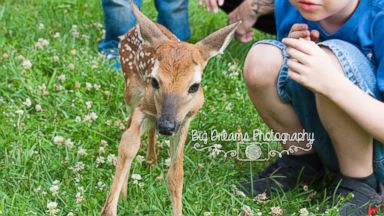 PHOTO: A tiny fawn photobombed a family photo shoot in Nashville, Tennessee this week.