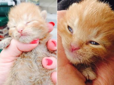 PHOTO: Miracle the kitten was found 24 hours after a fire in Jeffersonville, Indiana.