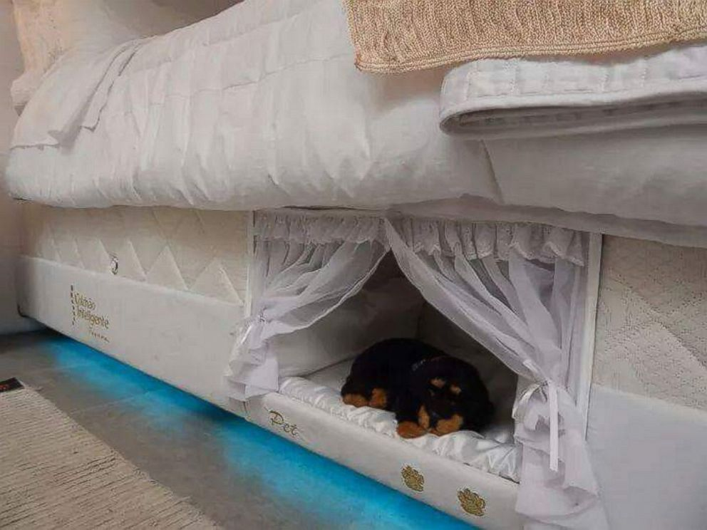 Brazilian mattress company creates 39 bunk beds 39 for you and for Pet bunk bed gallery