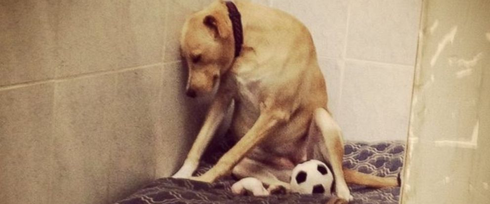 "PHOTO: After a Facebook photo of ""The Saddest Dog in the World"" went viral, Lana the dog was placed in a temporary foster home and received over 2,000 adoption applications."