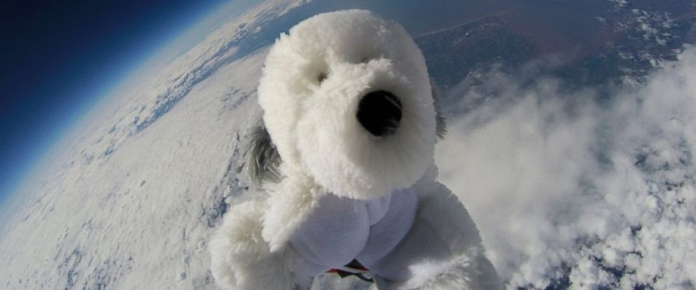 PHOTO: Sam the stuffed animal dog was sent into space by the Morecambe Bay Community primary school as part of a science project. Attached to a helium balloon and a camera.